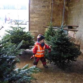Farm Shop Scottish Christmas Trees