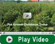 Play pot christmas tree video