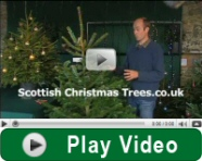 Play christmas tree care video