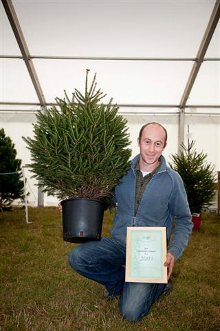 best pot grown norway spruce christmas tree