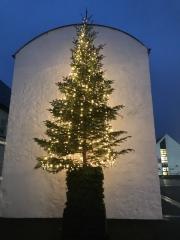 Ullapool Tree