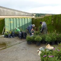 Paul and Donald sorting pot growen Norway Spruce