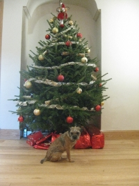 ailie-and-rorys-christmas-tree-with-peggy