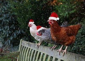 Christmas Hens