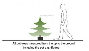pot-tree-sizes